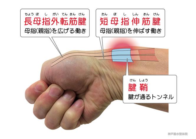 KENSHO-2-M.jpg